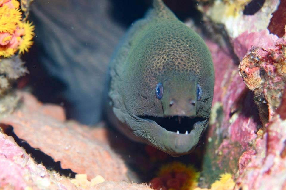 moray eal dive in myanmar