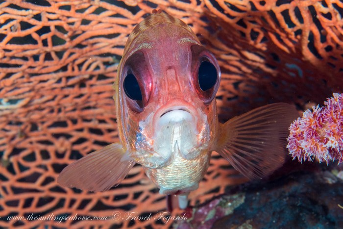 Portrait of a squirrel fish in Surin national park