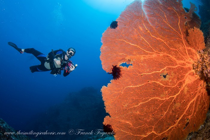 giant seafan in thailand with a scubadiver