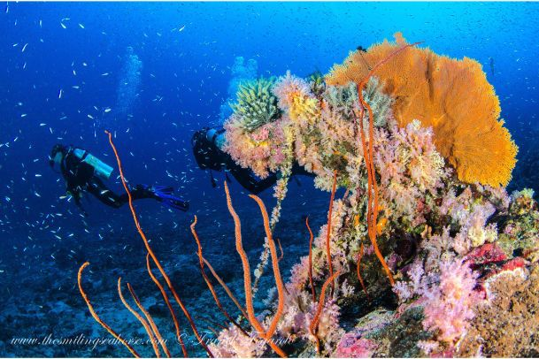 2 divers behind colorful coral