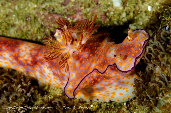 One nudibranch...