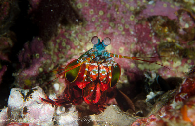 Beautiful under water creature on Burma's dive