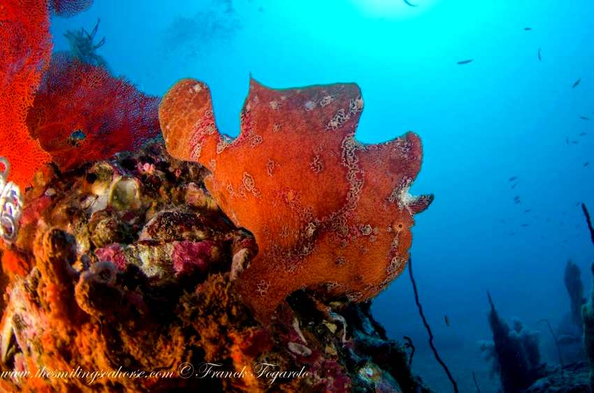 Frogfish?... Yes!