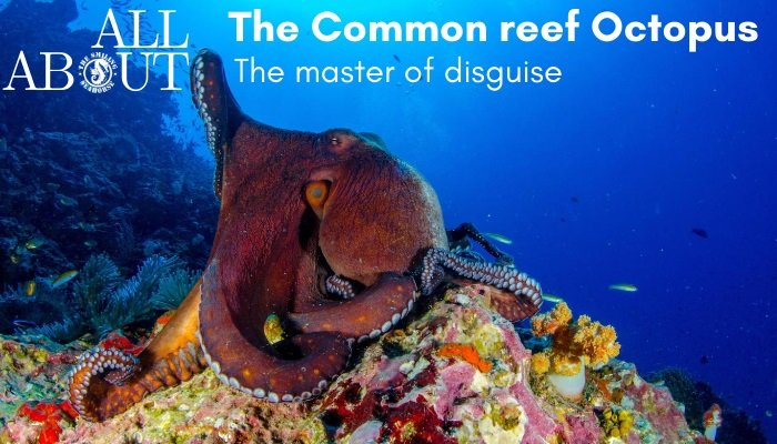 What Do You Know About The Common Reef Octopus
