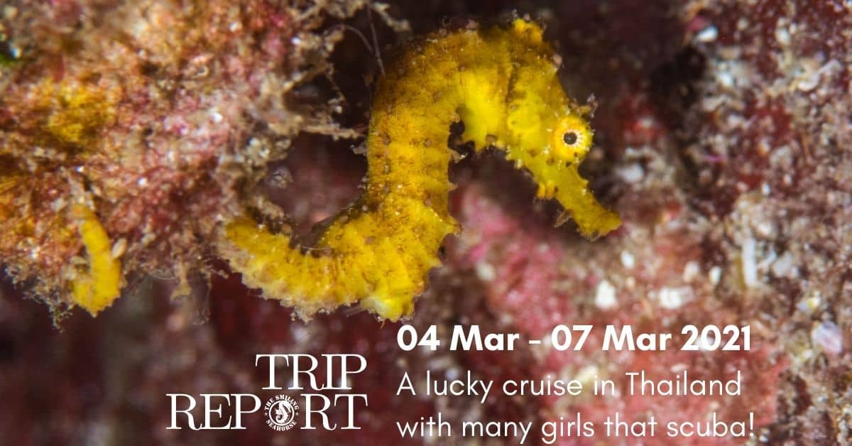 From 4th to the 7th of March 2021 diving cruise... 4 days full of fun! and girls!