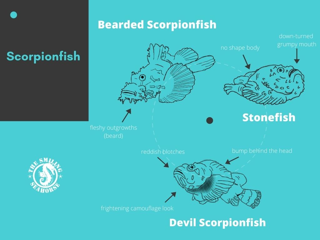 differentiate visually the 3 species of scorpionfish