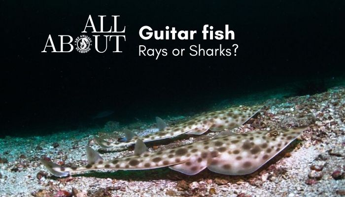 Guitar fish facts