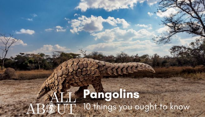 10 things you ought to know about pangolins