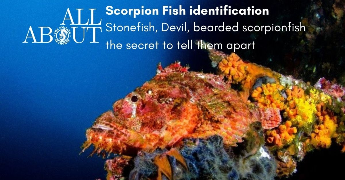 What are the 3 species of Scorpionfish that you must absolutely differentiate?