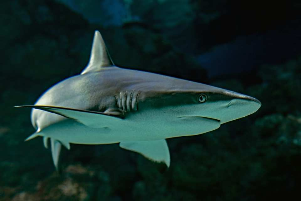 Sharks deserve to be protected in the same way as other sea creatures