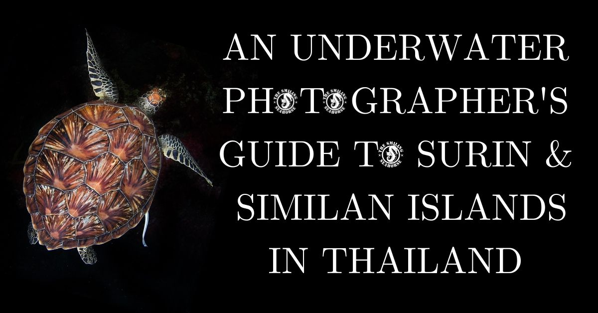Our underwater photographer's essential guide to the Surin and Similans in Thailand